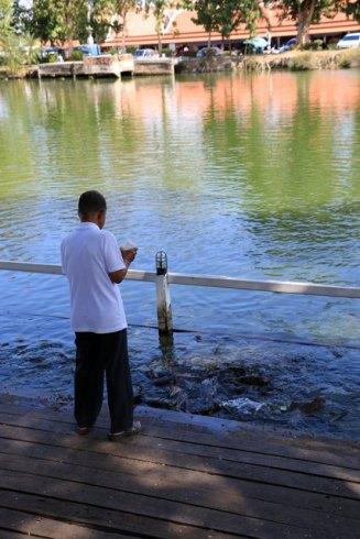 Le viel homme et les poissons, Wat Traphang Thong Lang, le temple proche de la cité antique de Sukhothaï