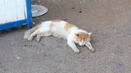 trop dure la vie d'un chat en Tunisie (à Sidi Bou Saïd)