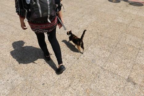 les chats sont nos amis, ils nous accompagnent partout, ici à Carthage
