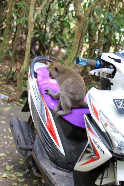 je suis malin comme un singe avec mon scooter.