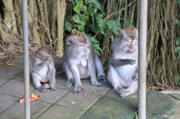 Othilie, Gwenaelle et Fabien à Monkey Forest