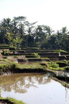 rizières en terrasse sur le chemin de la randonnée de Keliki à Ubud