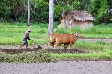 travaux des champs à Amed