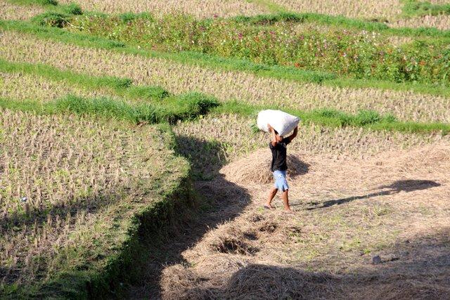 travaux des champs aux alentours d' Amed