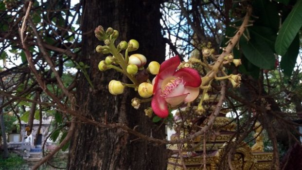 joli fleur dans un temple à Battambang