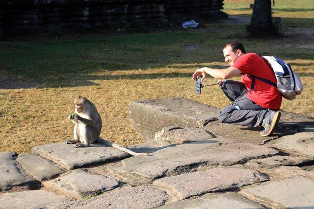 les temples d'Angkor - deux singes à Angkor Wat