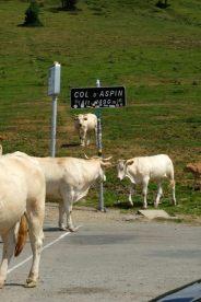 Vaches au col d'Aspin (moto road trip) - l'autre ailleurs, une autre idée du voyage