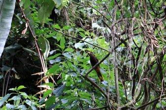 aux alentours de Jardin - l'autre ailleurs en Colombie, une autre idée du voyage