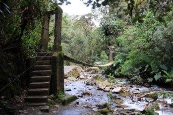 randonnée sous les palmiers de cire et vers la maison des colibris dans la vallée de Cocora près de Salento - l'autre ailleurs en Colombie, une autre idée du voyage