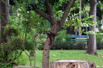 dans un parc à Bangkok - l'autre ailleurs, une autre idée du voyage