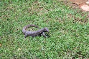 drôle de bestiole, dans la partie vieille ville de Galle- l'autre ailleurs au Sri-Lanka, une autre idée du voyage