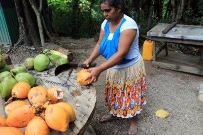 sur la route notre chauffeur de tuc-tuc nous offre une noix de coco à boire - l'autre ailleurs au Sri-Lanka, une autre idée du voyage