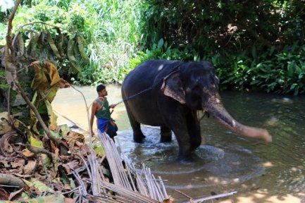 Elephant Experience NI ALLEZ PAS - l'autre ailleurs au Sri-Lanka, une autre idée du voyage