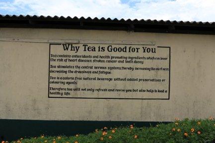 visite de l'usine de thé Pedro Estate, près de Nuwara Elyia - l'autre ailleurs au Sri-Lanka, une autre idée du voyage
