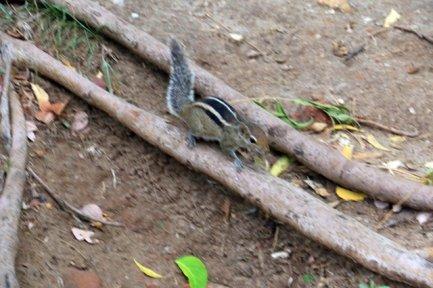 écureuil sur le site archéologique de Polonnâruvâ - l'autre ailleurs au Sri-Lanka, une autre idée du voyage