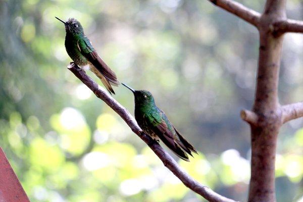 colibris près de Salento - l'autre ailleurs en Colombie, une autre idée du voyage