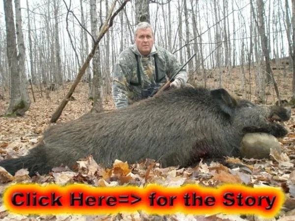 Boar Hunting the Autumn Rut
