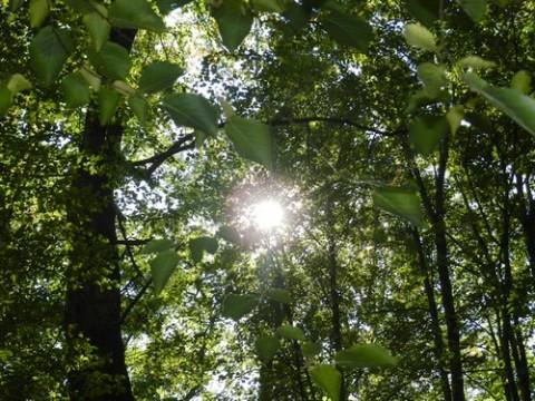 Forêt de Branviel, concours photo
