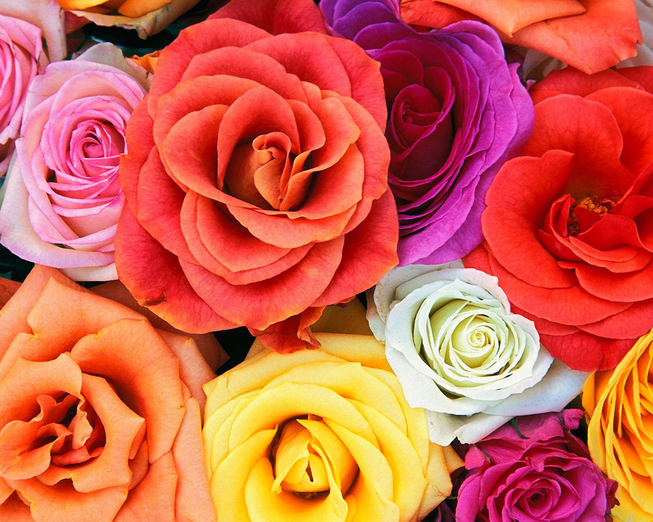30 Beautiful Flower Images Free To Download Available Ideas