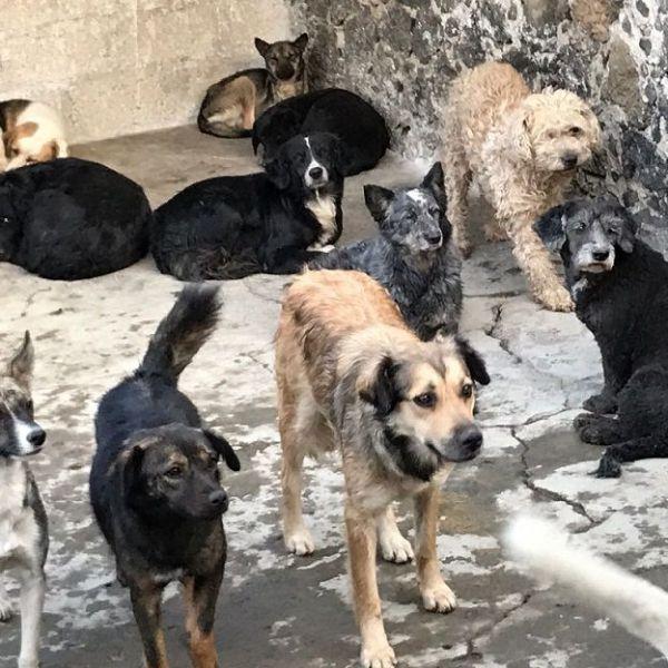 Asociaciones Protectoras de Animales legalmente constituidas