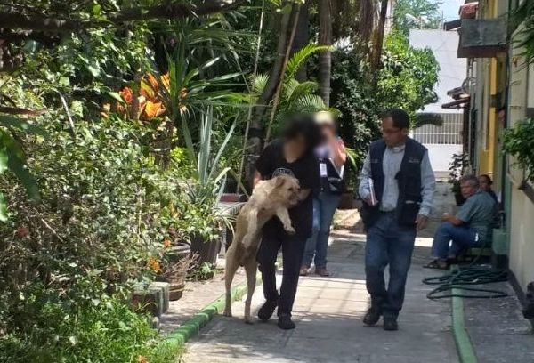 la Procuraduría ha presentado denuncias penales ante la Fiscalía General del Estado (FGE) por casos de maltrato animal como lo fue el envenenamiento de varios perros en Ocotepec y al ataque con un machete a uno más, ya que el maltrato animal está tipificado como delito en el Código Penal del Estado de Morelos