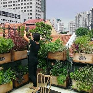 Élevage et agriculture urbaine