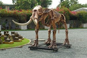 mastodon Squelette lebensgroß 307cm pour extérieur en fibre de verre haute qualité plastique (GFK)