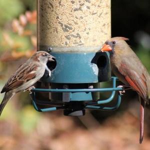 Oiseaux et animaux sauvages