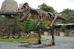 T-Rex Squelette lebensgroß 370cm pour l'extérieur en fibre de verre haute qualité plastique (GFK)
