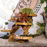 windalf Étagère Dragon Fleur Banque Draco H: 88cm Fleur en bois avec 5étagères à la main en bois de racine