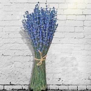 TooGet Lavande Séchée Ultra Bleu Bundles 100 Tiges (40cm – 45cm De Long) Pour La Décoration Intérieure, L'artisanat, Mariage Ou Toute Occasion