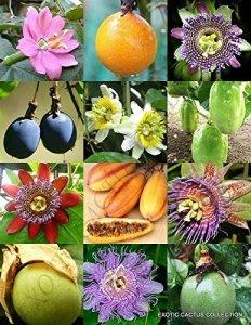 mélange PASSIFLORA – PASSION fruits exotiques comestibles graines de vigne de fleurs tropicales 100 graines