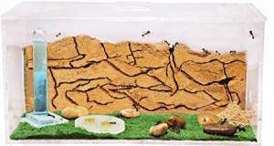 Fourmilière en Sable (Fourmis et Reine GRATUITES) – New Educational Ant Farm – Formicarium for Live Ants