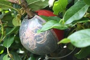 Coupe Globe Plante Propagateur 2Medium Ensemble de croissance pour plantes racines sur boutures en seulement 8Semaines–SE Propagent arbres, arbustes, roses, les plantes grimpantes et bien plus encore–Ajoutez d'enracinement hormone, racines de croissance sur le développement de plante