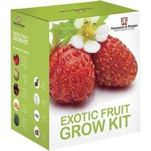 exotique fruitiers graines Kit en culture boite cadeau par Thomspon & MORGAN – 5 fruités Goûts à Grow ; fraises, melon, cerises tomate, Physalis & concombre graines