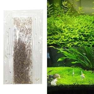 Ncient Graines pour Plantes Aquatiques, Graines d'Herbe Corail Graines d'Herbe d'Eau Aquarium