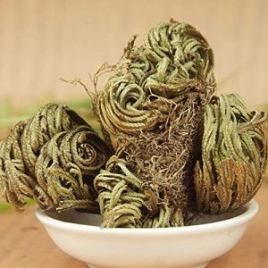Plantree 1pcs Live Resurrection Plant Rose De Jericho Dinosaure Plant Air Fougã¨Re Spike-Moss