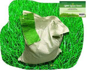 1kg de Graine d'Herbe de Qualité Premium couvre 35m² – Graine de Gazon à Croissance Rapide et Résistante à l'Usure – Niveau de Tolérance à l'Eau Exceptionnel – Garantie de Remboursement à 100%