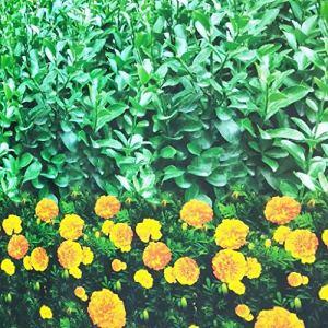 Gardening tools – plant cover Housse de Protection pour Plantes en Tissu Non tissé imprimé, à Froid et antigel (Couleur : A)