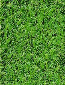 PEGANE Rouleau Gazon Artificiel d'extérieur en 100% polypropylène Coloris Vert – Dim : 4m x 25m