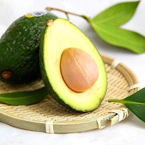 10 pcs graines avocat vert Fruit délicieux Persea americana Mill poire Graine facile à cultiver, graines de fruits pour la maison plantes de jardin