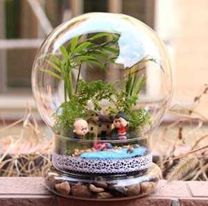 Ampoule en forme de bricolage Moss Micro Paysage Vase bouteille en verre plantes artificielles Décoration de la Maison par Shopidea