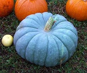 Farmerly Jarrahdale Blue Pumpkin, Cucurbita Maxima, 10 Seeds (6-10 Lbs.), Model:, Outdoor/Garden Store, Repair & Hardware