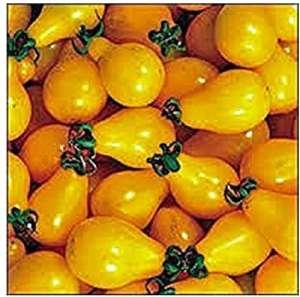 mxdmai Tomate, Jaune Tomate PEAR Seed, Heirloom, Bio, sans OGM, 25+ Seeds, Savoureux, IDéAL pour SALADES