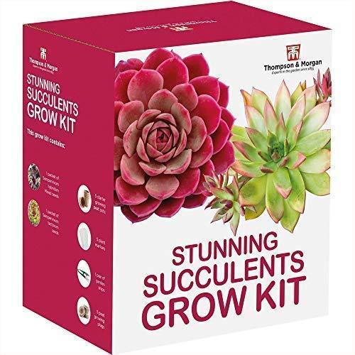 Superbe Succulentes Kit en Culture Boite Cadeau – Cultivez ...