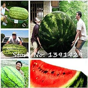 Farmerly 2017 New 30Pcs Giant Watermelon Seeds, Sweet Taste Vegetables and Fruit Seeds, Very Big Delicious, Garden Plants