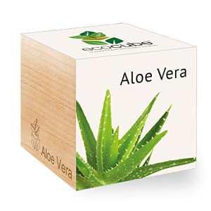 Feel Green Ecocube Aloe Vera Exotics, Idée Cadeau (100% Ecologique), Grow-Your-Own/Kit Prêt-à-Pousser, Plantes Dans Des Cubes En Bois 7.5cm, Produit En Autriche