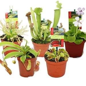Kit de démarrage des plantes carnivores – 5