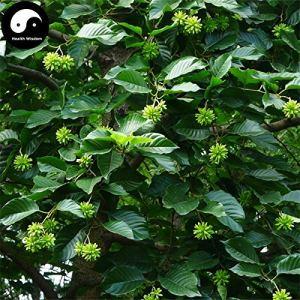 Shopmeeko Acheter Erythrophleum Fordii Arbre Semente 60pcs Planter Tali En Bois Dur Pour Chinois Ge Mu