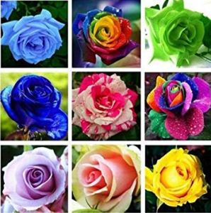 Farmerly 20 Kinds Mixed 100 Rose Seeds/Pack, Four Seasons Sowing The Seeds of Perennial Flowers, Rose Flowers Seeds Easy to Plant